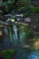 [諸戸川][渓流][源流][谷川][渓谷]諸戸川