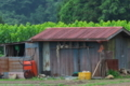 [農具小屋][小屋][納屋][クワ畑][桑畑]農具小屋