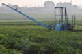 [コンニャク畑][蒟蒻畑][こんにゃく畑][圃場][朝霧]コンニャク畑