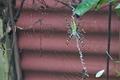 [ナガコガネグモ][コガネグモ科][田んぼ][害虫駆除][益虫]ナガコガネグモ