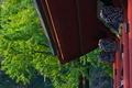 [総門][秋の日差し][イチョウ][銀杏][妙義神社]総門