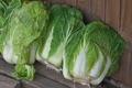 [白菜][白菜][納屋][農具小屋][冬野菜]