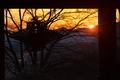 [朝の境内][朝日][朝焼け][総門][妙義神社]朝の境内