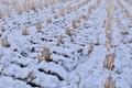 [田んぼ][田][田園][雪][積雪]田んぼ