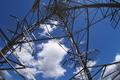 [送電線][電線][鉄塔][雲][青空]送電線