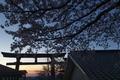 [鳥居][一の鳥居][一之鳥居][桜][妙義神社]鳥居
