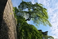 [五月の空][石垣][しだれ桜][県指定重要文化財][妙義神社]五月の空
