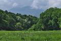 [浅間山][浅間][草原][ハルジオン][ミズキ]浅間山