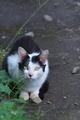 [猫][ネコ][ねこ][野良猫][野良ネコ]猫