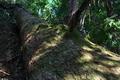 [倒木][モミ][巨木][登山道][大牛川]倒木