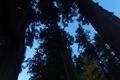 [頭上の月][月][杉][スギ][妙義神社]頭上の月