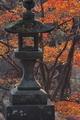 [静かな参道][参道][石灯籠][灯籠][妙義神社]静かな参道