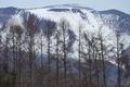 [浅間山][浅間][雪冠][カラマツ][活火山]浅間山