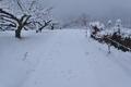 [畑道][農道][梅畑][丸山坂][雪道]畑道