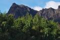 [白雲山][妙義山][表妙義][竹やぶ][竹林]白雲山