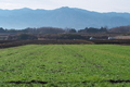 [圃場][コンニャク畑][牧草地][農耕車][中野谷]圃場