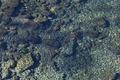 [碓氷川][一級河川][利根川水系][清流][滝名田]碓氷川