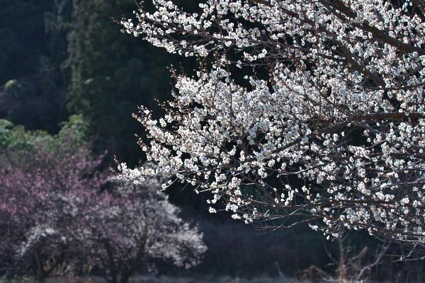 f:id:keihirota:20200225231456j:image