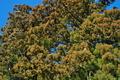 [スギ花粉の時期][スギ][杉][花粉][妙義神社]スギ花粉の時期