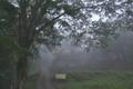 [定点撮影][定点][濃霧][霧][妙義神社]定点撮影