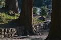 [彼岸のころ][参道][登山道][老杉][妙義神社]彼岸のころ