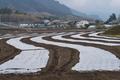 [コンニャク畑][こんにゃく畑][蒟蒻畑][マルチシート][土壌消毒]コンニャク畑