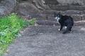 [猫][ネコ][野良猫][ねこ][路地裏]猫
