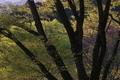 [静かなGW][ケヤキ][欅][新緑][妙義神社]静かなGW