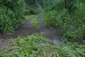 [河畔林][ハリエンジュ][碓氷川][雨水][滝名田]河畔林