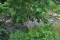 [後閑川][小川][オニグルミ][三ツ木橋][城山トレイル]後閑川