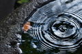 [水盤][水面][波紋][木の葉][補陀寺]水盤
