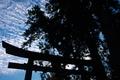 [銅鳥居][鳥居][夜明け][御神木][妙義神社]銅鳥居