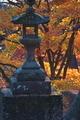 [石灯籠][灯籠][イロハモミジ][紅葉][妙義神社]石灯籠
