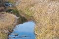 [後閑川][小川][九十九川支流][碓氷川水系][小井戸橋]後閑川