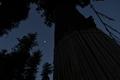 [月夜][月][遥拝所][御神木][妙義神社]月夜