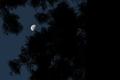 [月夜][月][月齢21][御神木][妙義神社]月夜