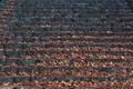 [冬の参道][石段][落ち葉][吹き溜り][妙義神社]冬の参道