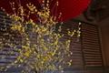 [正月明け][ロウバイ][蝋梅][社務所][妙義神社]正月明け