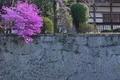[石垣][ミツバツツジ ][ツツジ][御殿][妙義神社]石垣