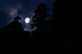 [月][雨上がり][夜明け][杉][妙義神社]月
