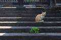 [猫][ネコ][ねこ][野良猫][五料]猫