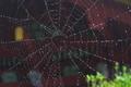 [入梅][クモの巣][雨粒][総門][妙義神社]入梅