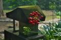 [トチバニンジン][ウコギ科][水神社][赤い実][妙義神社]トチバニンジン