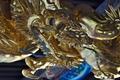 [金色の龍][龍][本社][拝殿][妙義神社]金色の龍