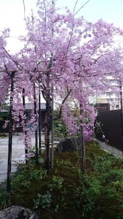 f:id:keiji-k5656:20170413144048j:image