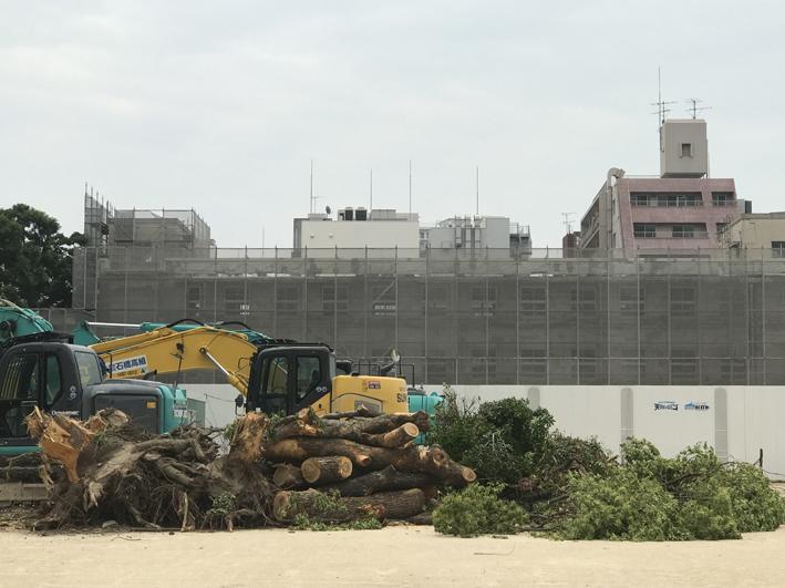 福岡市大名小学校跡地都市再開発/伐採された樹木