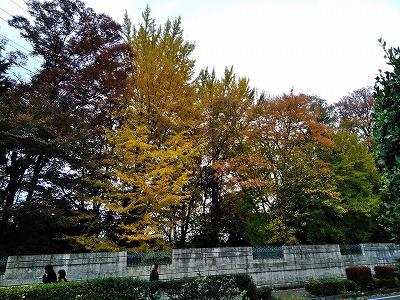 f:id:keiko-blog:20171121155926j:plain
