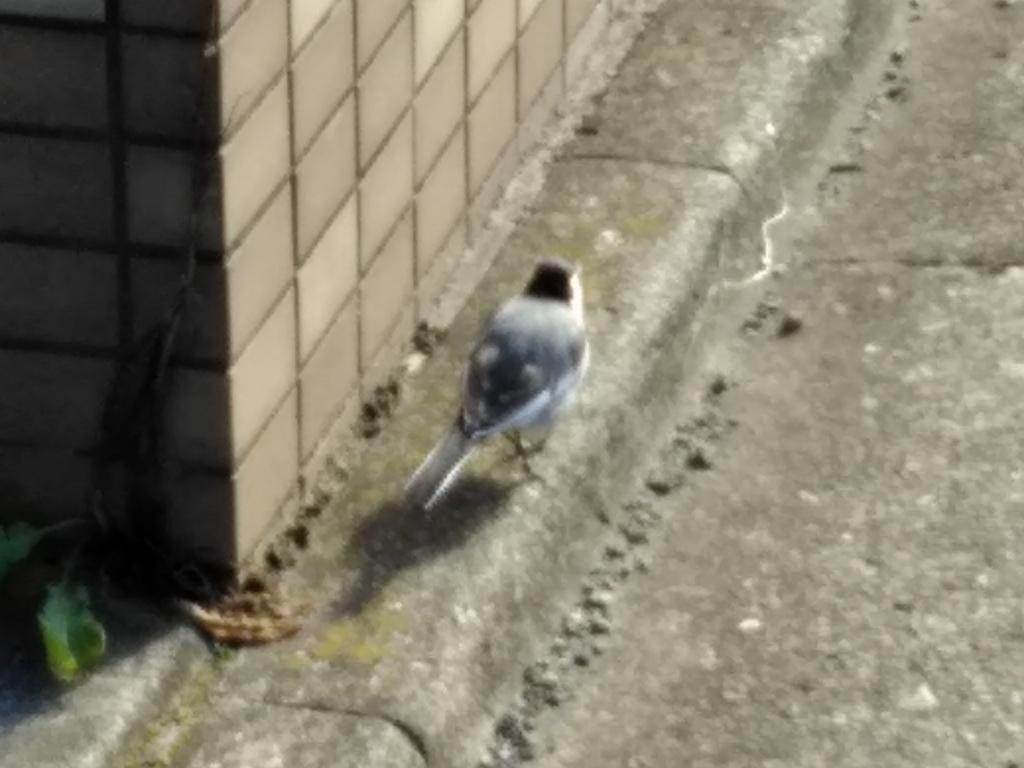 f:id:keiko-blog:20180113141610j:plain