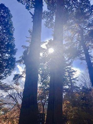 f:id:keiko-blog:20181130110345j:plain