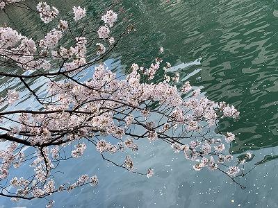 f:id:keiko-blog:20190405092825j:plain